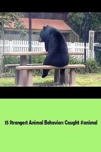 15 Strangest Animal Behaviors Caught #animal