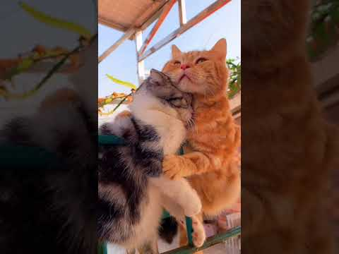 What's the matter with these two cats hugging each other?