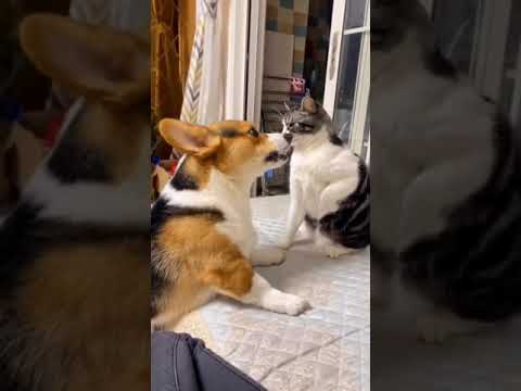 Why do cats and dogs like to fight?