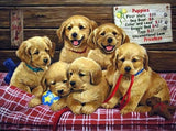 Six Brown Puppies