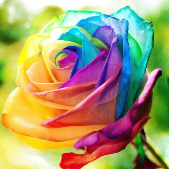 Rainbow Color Rose DIY Diamond Painting