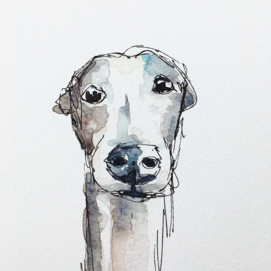 Greyhound illustration A5