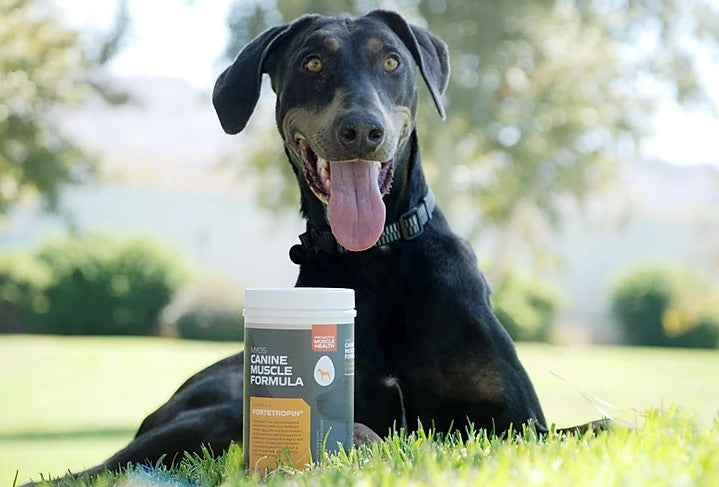The Top 5 Superfoods That Will Keep Your Dog Healthy
