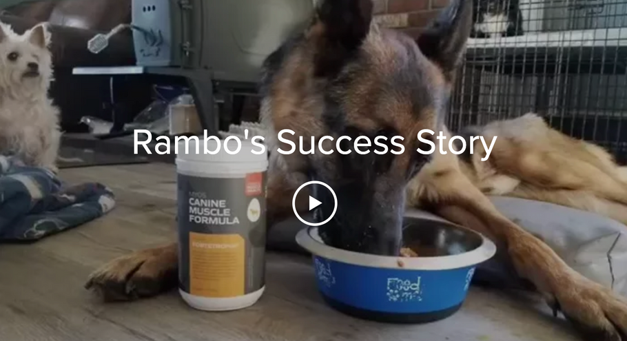 Rambo's Success Story