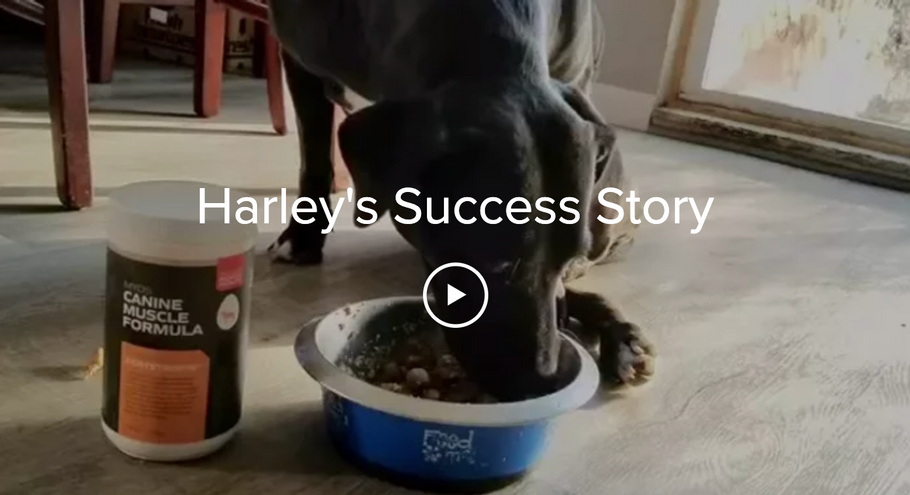Harley's Success Story