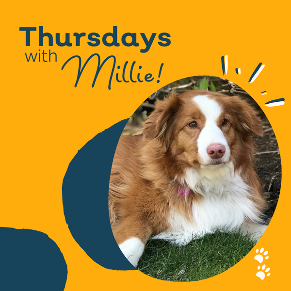 Thursday with Millie: Answering Some of Your Questions