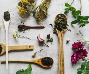 The most widely used medicinal plants