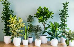 The Best Indoor houseplants for Plant Killers