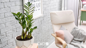 Types of flower stands and ideas for choosing houseplants