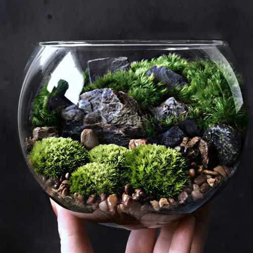 Terrarium a word that struggles to find its place even in literature !!