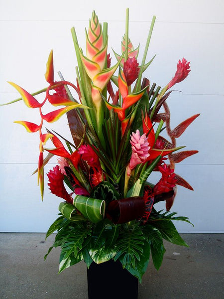 V-day Tropical (Tall and Large)