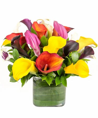 Beautiful Calla Lilies