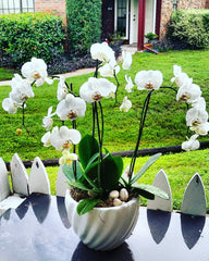 Happy Orchids