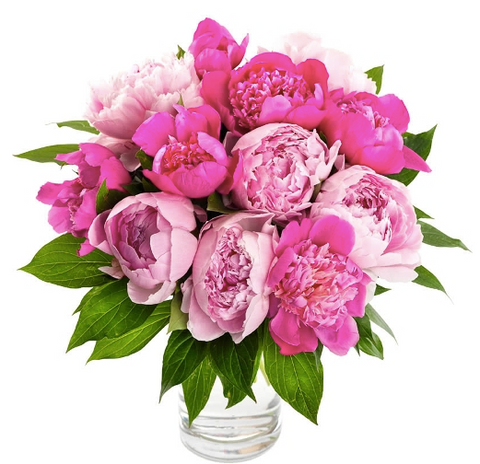 Peonies (On Sale)