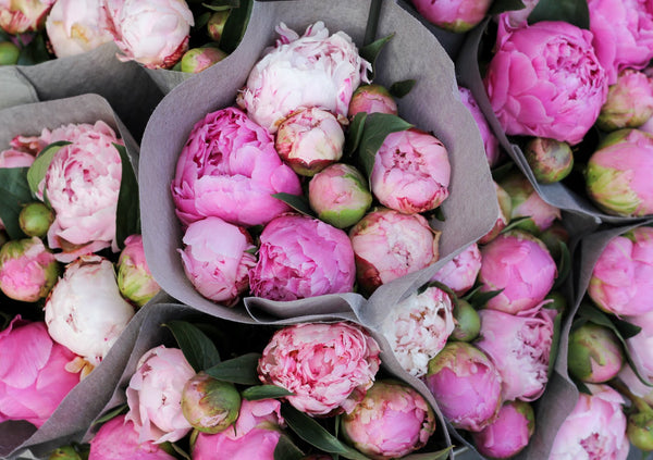 Peonies Bouques