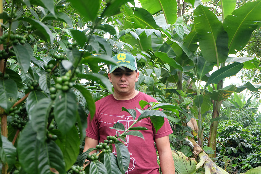 Elkin Guzman coffee producer