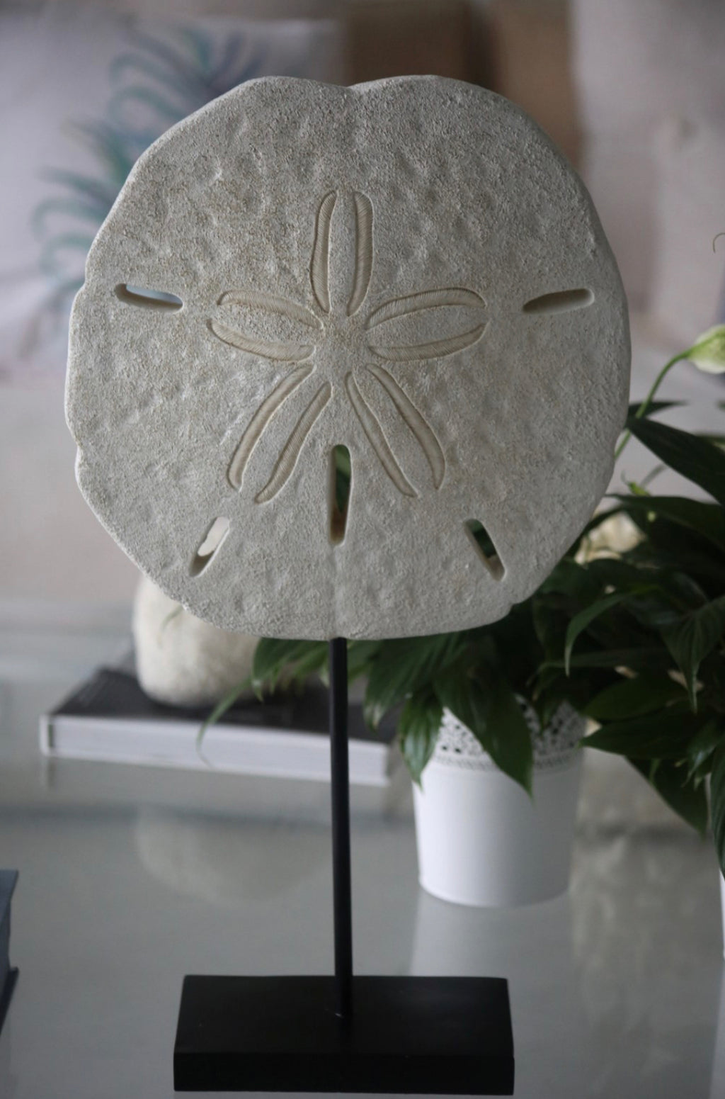 Faux Sand Dollar stand and plinth