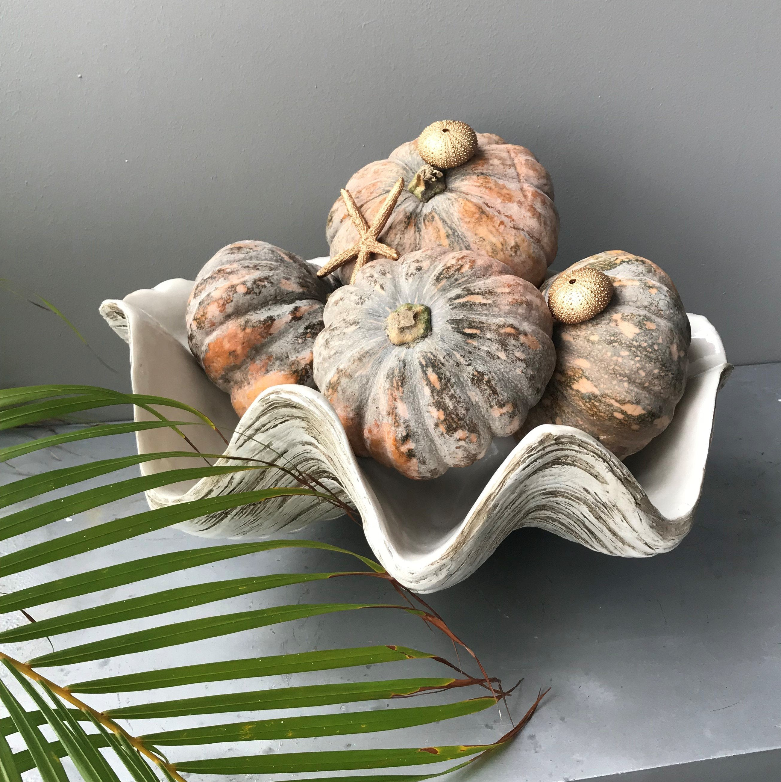 50cm Faux - Giant Clam, Sun bleached base with natural matte interior