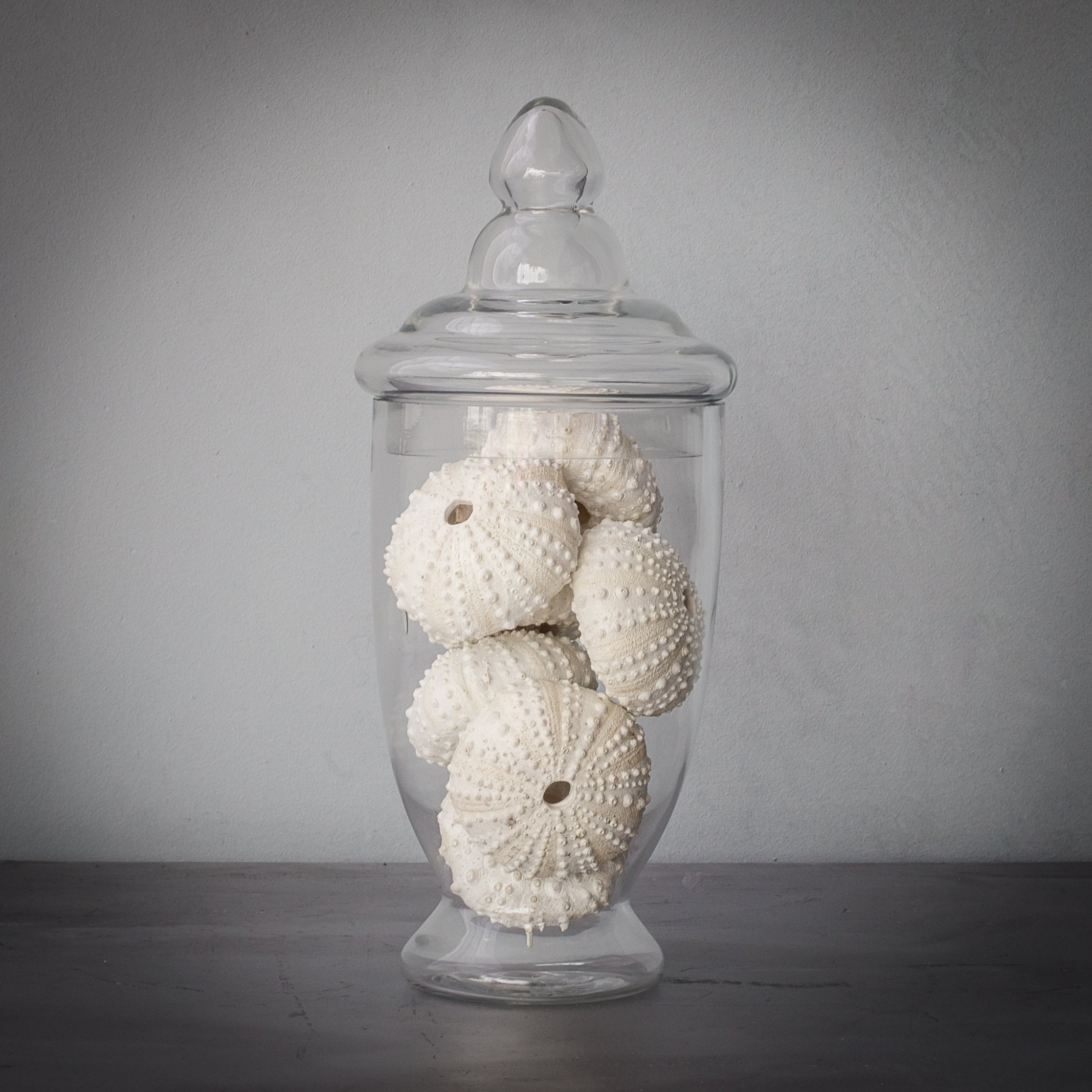 Faux - Small Glass Apothecary Jar With Sea Urchins