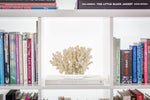 Faux Lace Coral - Glass Plinth