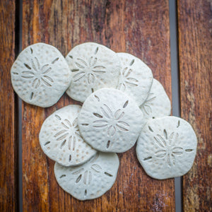 Pack of 8 tiny sand dollars