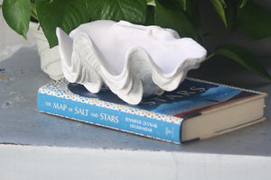 Ruffle Giant Clam - Matt Finish