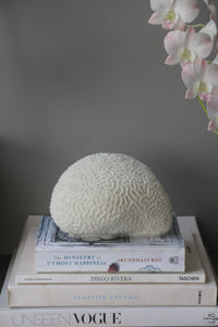 Large Brain Coral
