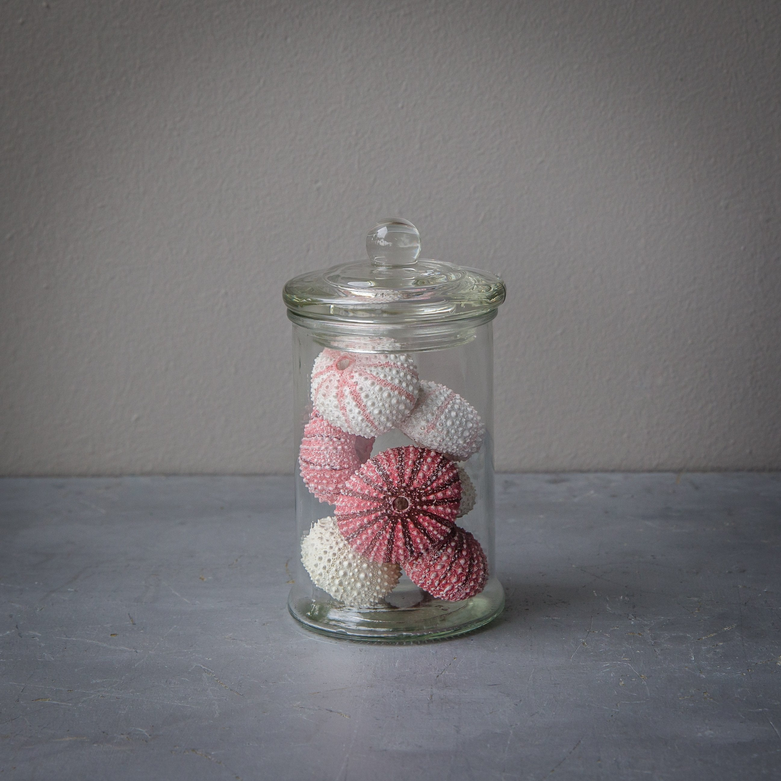 Small Jar with Tiny Blush Sea Urchins