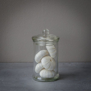 Small Glass Jar with - 6 Faux White Tiny Sea Urchins