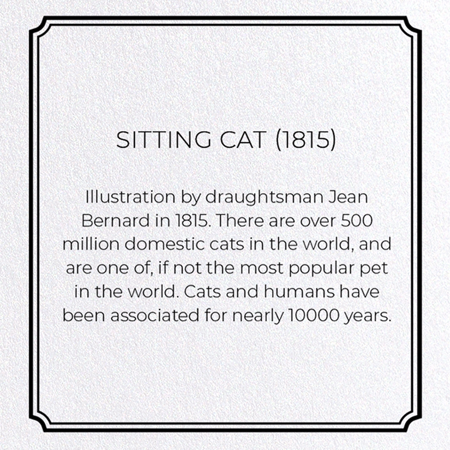 SITTING CAT (1815): 8xCards