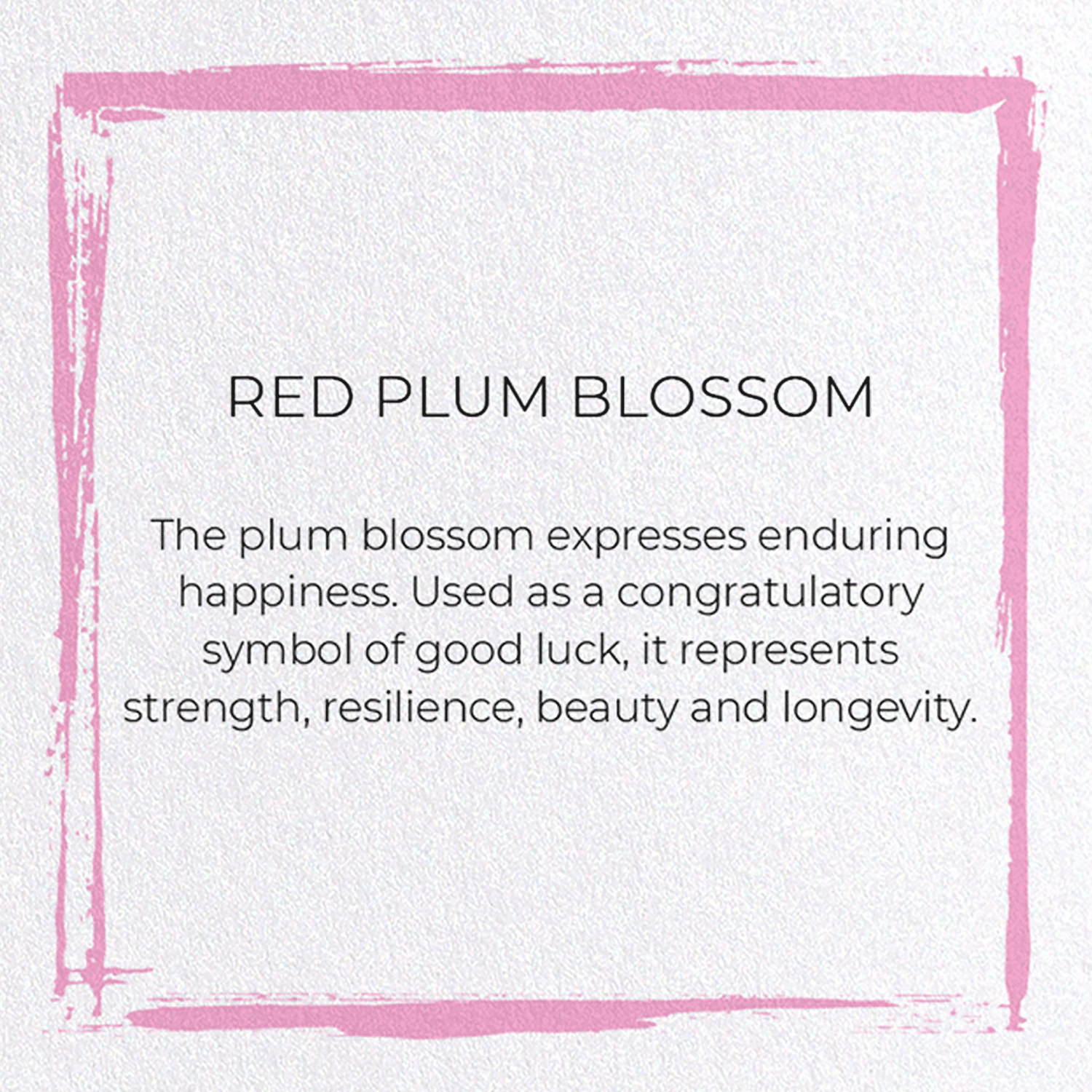 RED PLUM BLOSSOM: 8xCards