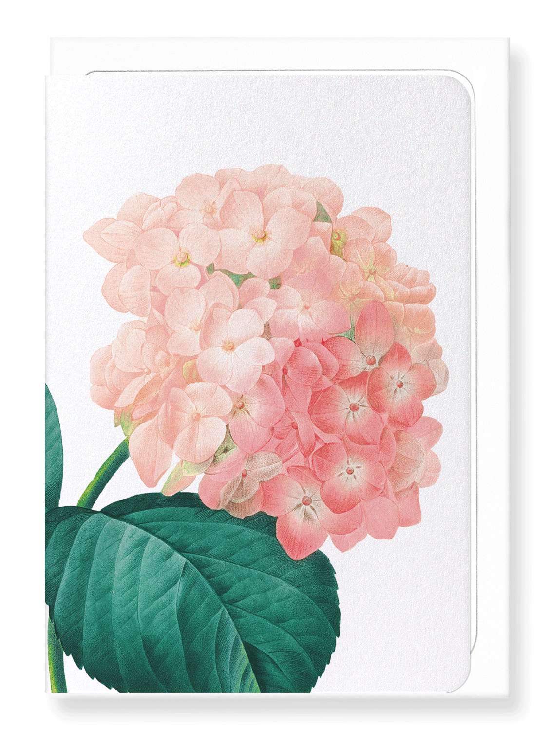Ezen Designs - Hortensia (detail) - Greeting Card - Front