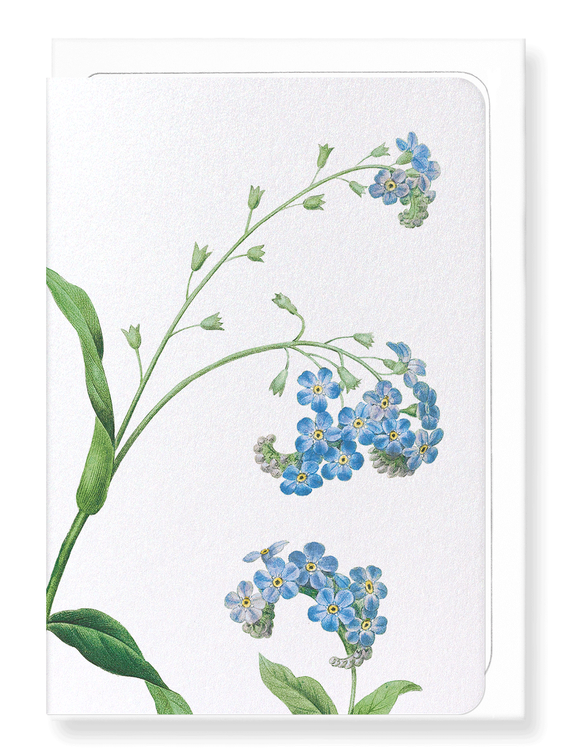 Ezen Designs - Forget me not flower (detail) - Greeting Card - Front