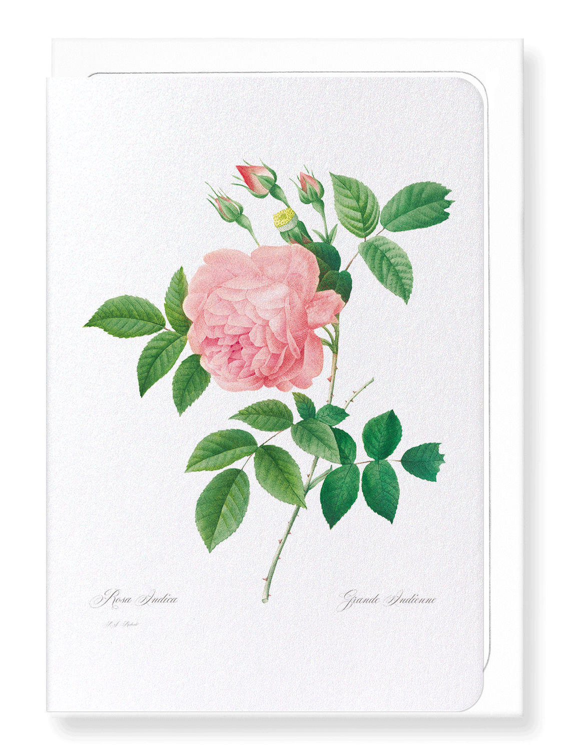 PINK ROSE NO.1: 8xCards