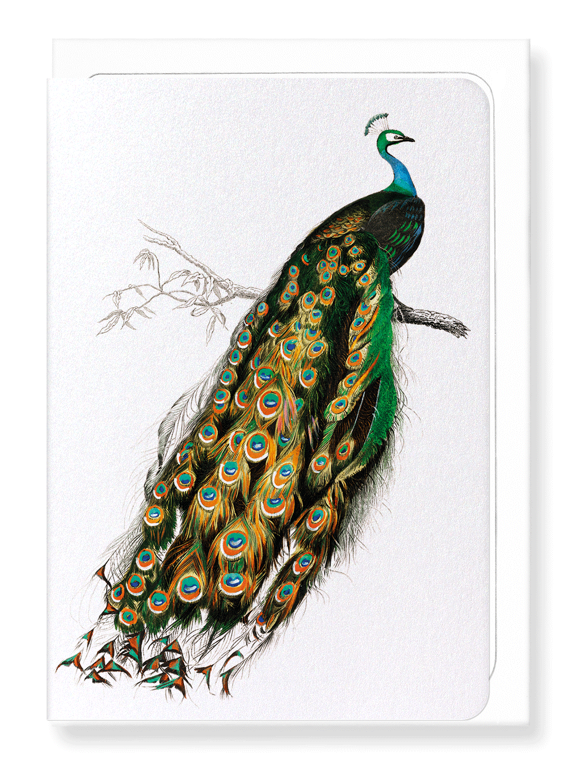 Ezen Designs - Indian peafowl - Greeting Card - Front