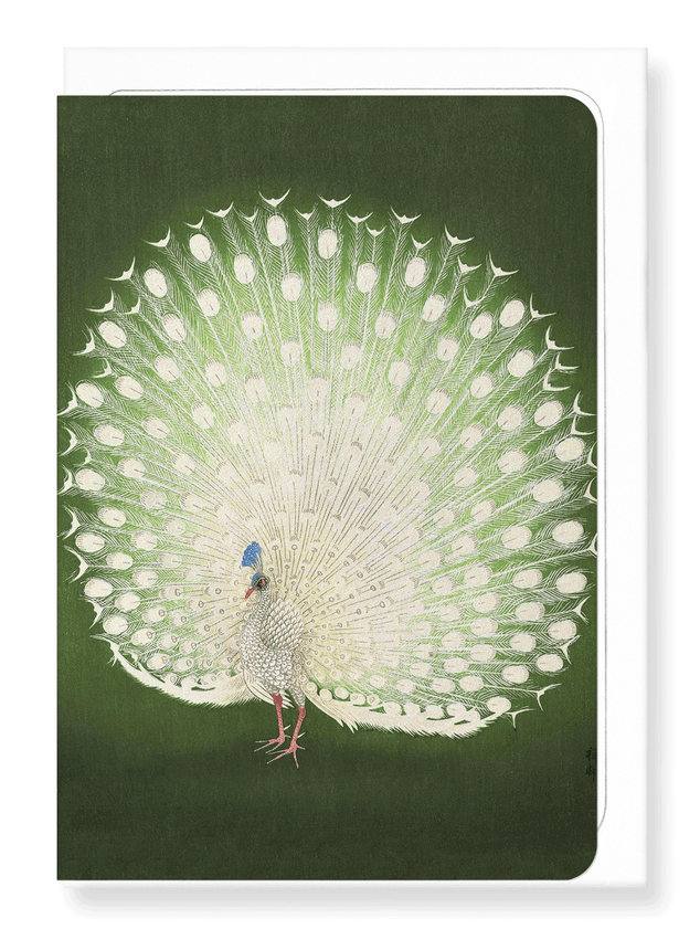 Ezen Designs - White peacock - Greeting Card - Front