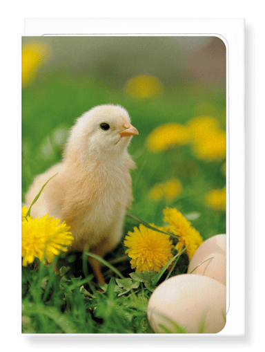 Ezen Designs - Easter chick - Greeting Card - Front