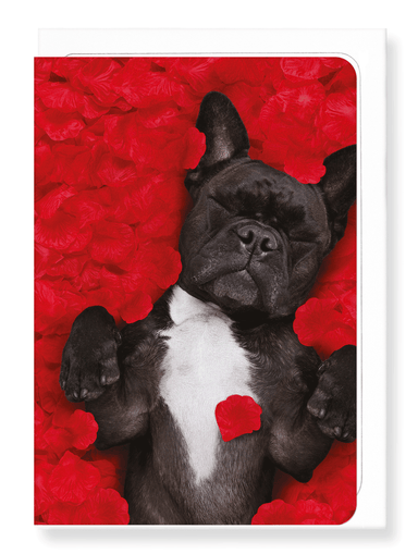 Ezen Designs - Frenchie dream - Greeting Card - Front