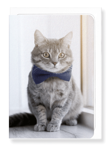 Ezen Designs - Groomed kitten - Greeting Card - Front