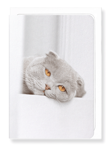 Ezen Designs - Lazy cat - Greeting Card - Front