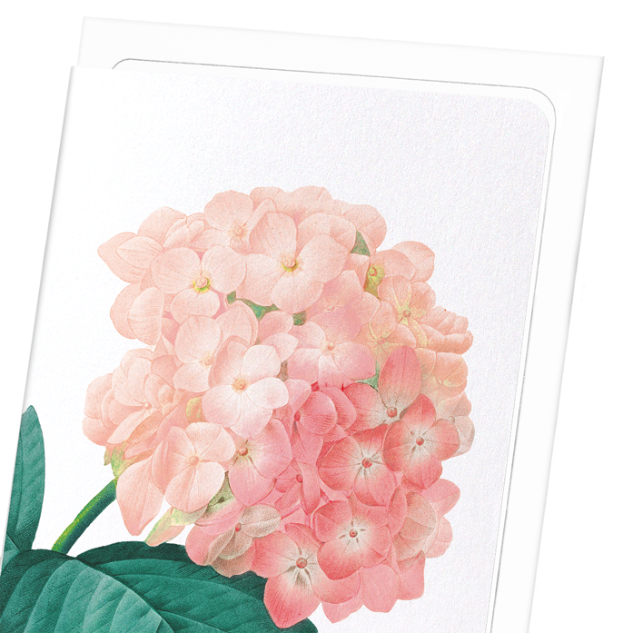 HORTENSIA: 8xCards