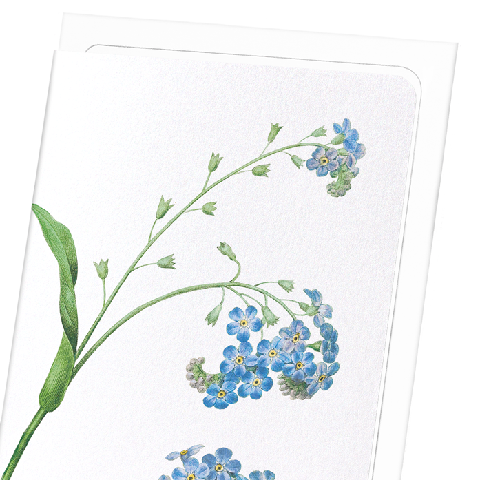 FORGET ME NOT FLOWER: 8xCards