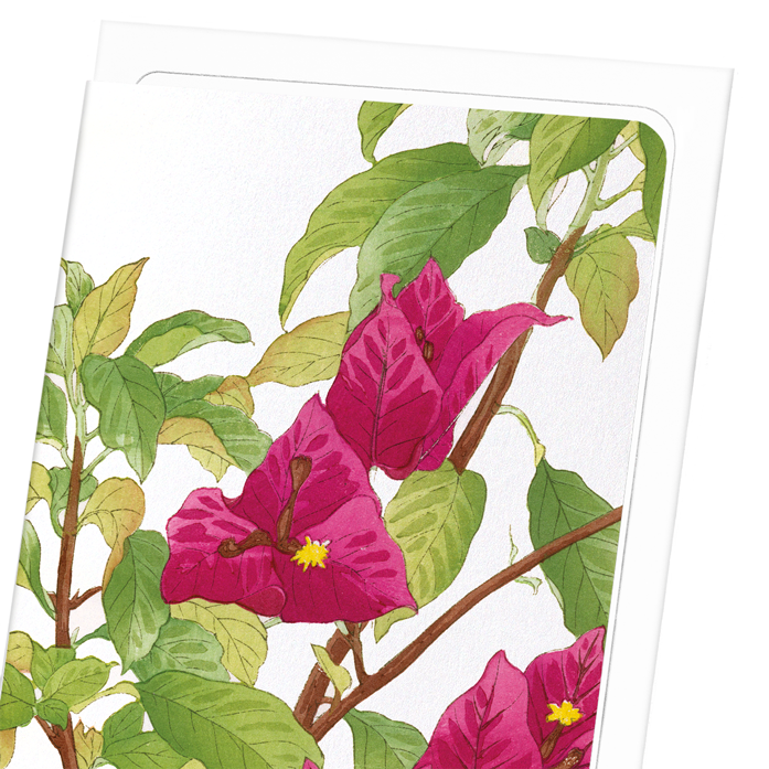 BOUGAINVILLEA: 8xCards