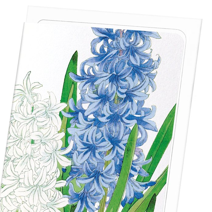 HYACINTH: 8xCards