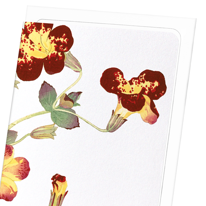 FLOWER STUDY: 8xCards