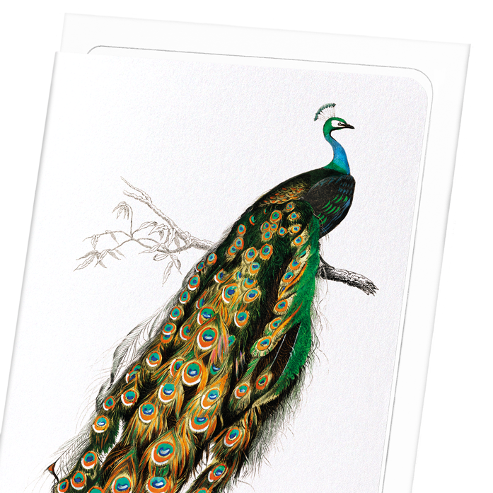 INDIAN PEAFOWL: 8xCards