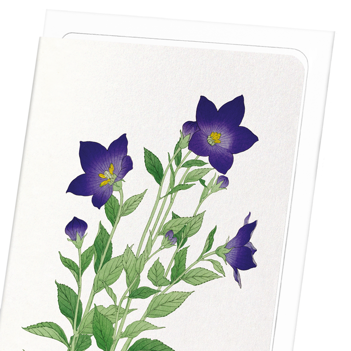 PURPLE BELL FLOWER: 8xCards