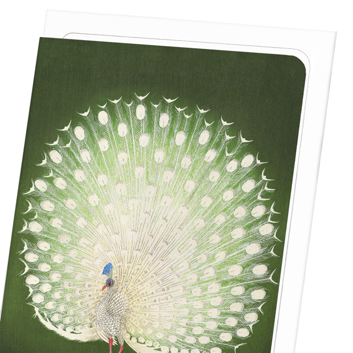 WHITE PEACOCK: 8xCards