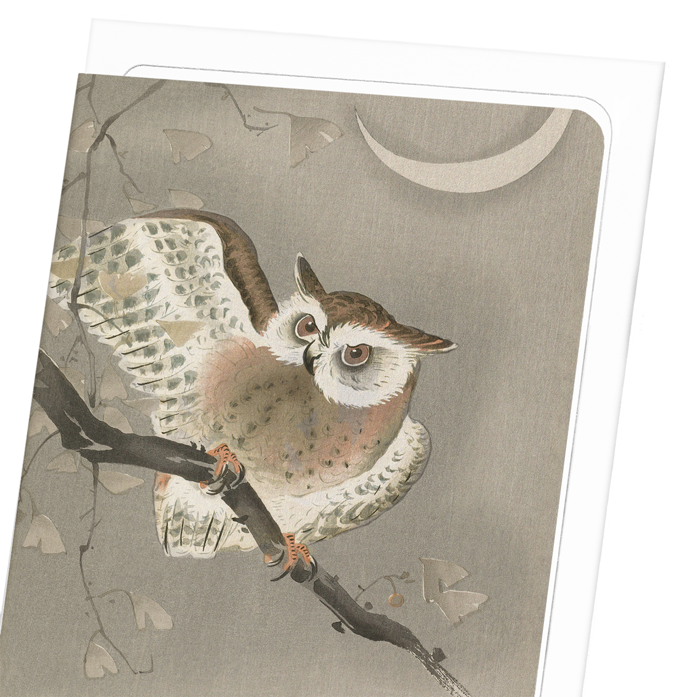 LONG-EARED OWL: 8xCards