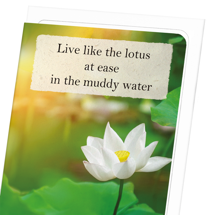 LOTUS IN THE LIGHT: 8xCards